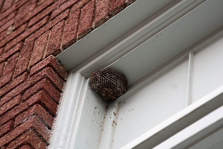 We provide a wasp nest removal service for domestic and commercial properties in St Johns Wood.
